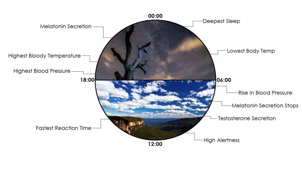 circadianClock